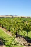 Barossa Valley, Australia. Landscape of Barossa Valley, Australia Royalty Free Stock Photo