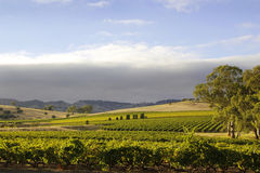 Barossa Valley Landscape Royalty Free Stock Images