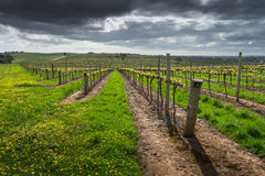 Barossa Valley Scene Stock Photo