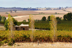 Barossa Valley Stock Photo
