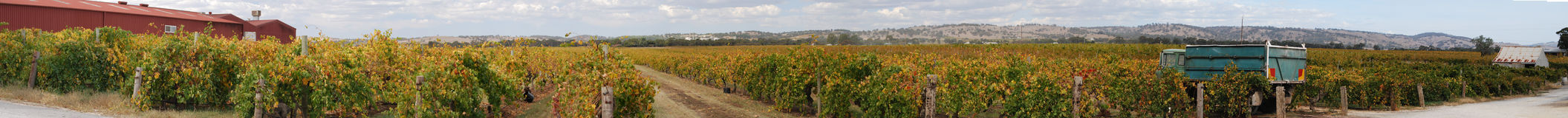 Barossa Valley Vines Royalty Free Stock Photography