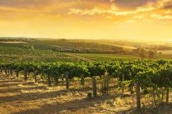 Barossa Valley Vineyards. Sun setting over a Barossa Valley vineyard Royalty Free Stock Photo