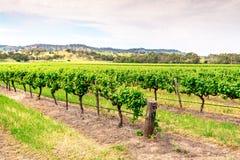 Barossa Valley Weinberge, Süd-Australien Lizenzfreies Stockbild