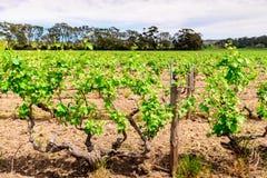 Barossa Valley winery Royalty Free Stock Photo