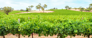 Barossa valley winery Royalty Free Stock Photos