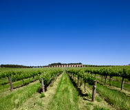 Barossa Vineyard. Vineyard in the Barossa Valley, South Australia royalty free stock photo