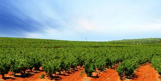Barossa Vineyard Royalty Free Stock Photography