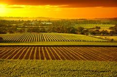 Barossa Vineyards Australia. Sunset over Barossa Valley vineyards South Australia Royalty Free Stock Photos