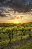 Barossa vingårdar på solnedgången Royaltyfri Fotografi