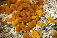 Barra condimentada albaricoque del flapjack/de granola Fotos de archivo
