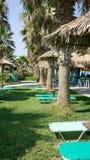 Barra de la playa con la palmera Imágenes de archivo libres de regalías