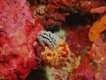 Barra de mar verdadera Foto de archivo