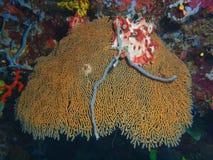 Barra de mar verdadera Fotos de archivo