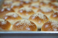 Barra de pan redonda con las semillas de sésamo en la bandeja imagen de archivo libre de regalías