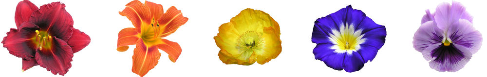 Barra floral do arco-íris Imagem de Stock