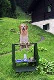 Barra per i cani Fotografie Stock Libere da Diritti
