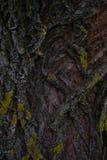 Barra vieja del árbol Imagenes de archivo
