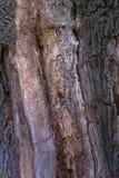 Barra vieja del árbol Foto de archivo libre de regalías