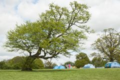 Barraca de acampamento das aventuras no prado verde sob a árvore inclinada imagens de stock royalty free
