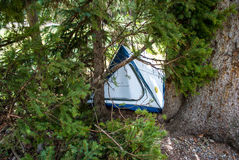 Barraca de acampamento escondida com ramos de pinheiro Foto de Stock