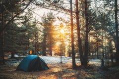 Barraca em uma floresta do pinho no por do sol Foto de Stock Royalty Free