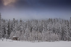 Barraca fria da floresta do inverno fotos de stock royalty free