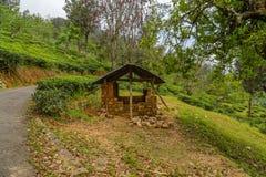 barraca nos campos verdes do verde da folha de chá Fotos de Stock