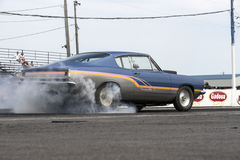 Barracuda in action on the track Stock Photo