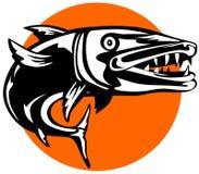 Barracuda dans la recherche de la proie Photo libre de droits