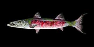 Barracuda de poissons avec des roses Illustration de vecteur Images stock