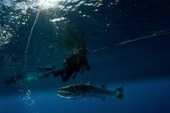 Barracuda en scuba-duiker Stock Afbeelding