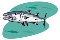 Barracuda hunting for a prey royalty free illustration