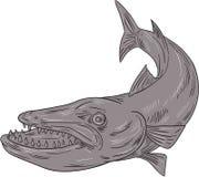 Barracuda nageant en bas du dessin Photographie stock