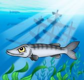 Barracuda with shipwreck. Color illustration Stock Photography