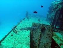 Barracuda sur le naufrage Image stock