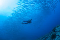 Barracuda underwater picture Sudan Red sea diving safari Stock Image