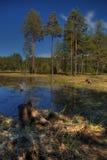 Barrage de poliana de Shiroka avec des pins Photo libre de droits