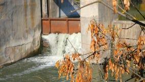 Barrage sur un petit fleuve Cascade Paysage de l'automne banque de vidéos