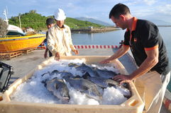 Barramundi fish are farmed in the Van Phong Bay and exported to the world market Stock Image