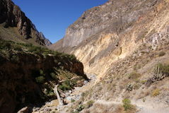 Barranca de Colca, Perú Imagen de archivo libre de regalías
