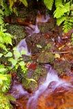 Barranca del cupatitzio V. Natural national park barranca del cupatitzio, uruapan michoacan, mexico Royalty Free Stock Images