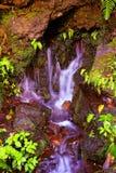 Barranca del cupatitzio VII. Natural national park barranca del cupatitzio, uruapan michoacan, mexico Stock Photos