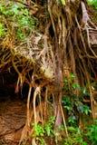 Barranca del cupatitzio VIII. Natural national park barranca del cupatitzio, uruapan michoacan, mexico Royalty Free Stock Photo