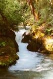 Barranca del cupatitzio XXIV. Natural national park barranca del cupatitzio, uruapan michoacan, mexico Royalty Free Stock Image