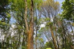 Barranca del cupatitzio XXIX. Natural national park barranca del cupatitzio, uruapan michoacan, mexico Stock Image