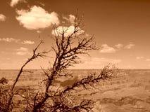 Barranca magnífica Imagenes de archivo