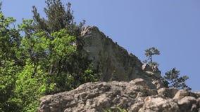 Barranca magnífica de Crimea Montañas crimeas, bosque, río de la montaña almacen de video
