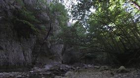 Barranca magnífica de Crimea Montañas crimeas, bosque, río de la montaña almacen de metraje de vídeo