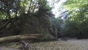 Barranca magnífica de Crimea Montañas crimeas, bosque, río de la montaña metrajes