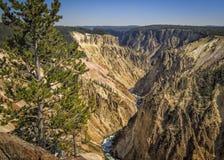 Barranca magnífica de Yellowstone Foto de archivo libre de regalías
